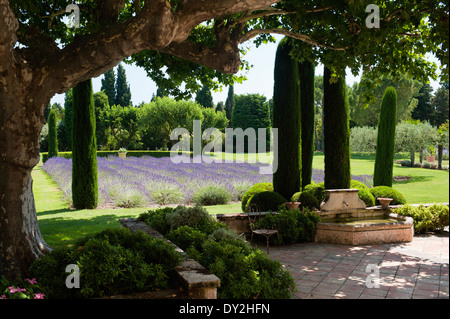 provenzalischen garten mit lavendel und zypressen. Black Bedroom Furniture Sets. Home Design Ideas