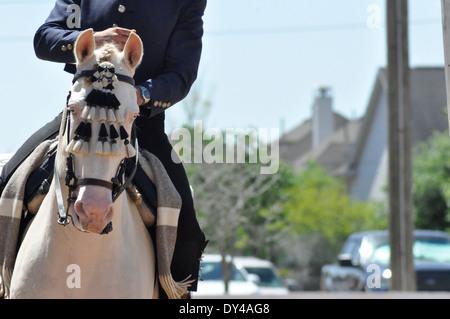 Lusitano Pferd Kopfschuss in Kopfbedeckungen mit Reiter im Galopp mit Häusern im Hintergrund - Stockfoto