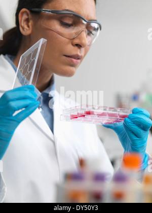 Stammzellenforschung. Wissenschaftlerin untersucht Zellkulturen in multiwell Schale - Stockfoto