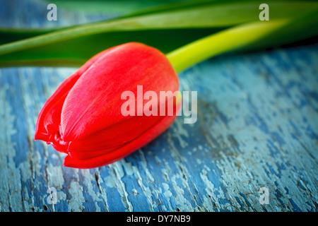 Rote Tulpe auf alten hölzernen Hintergrund gemalt - Stockfoto