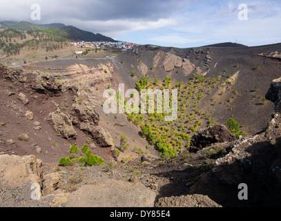 Kiefern wachsen in den Krater des Vulkans San Antonio in der Nähe der Stadt Los Canarios auf der Kanareninsel La - Stockfoto