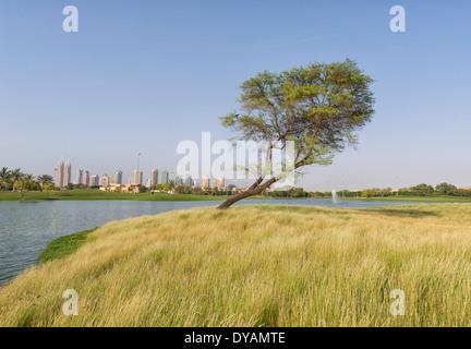 Bild des einsamen Baum im Emirates Golf Club in Dubai, Vereinigte Arabische Emirate - Stockfoto
