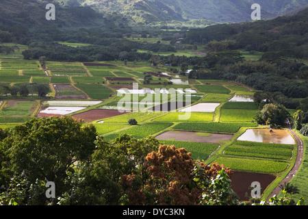 Hanalei Tal mit Taro-Anbau in gemischten Phasen der Entwicklung - Stockfoto