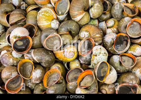 Orlando Florida East Colonial Drive Little Saigon Tien Hung Oriental Foods einkaufen Supermarkt Supermarkt Lebensmittel - Stockfoto