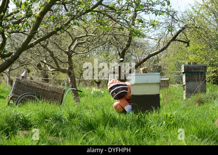 National Trust Bee Keeper halten Honig Bienen Bienenstock Uk - Stockfoto