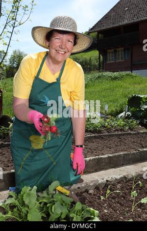 Foto von einer pensionierten Frau ziehen Radieschen aus ihrem Gemüsegarten. - Stockfoto
