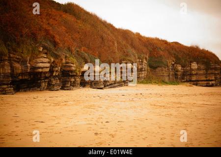 Sandstrand mit Erosion der Sedimentgesteine und kontrastierenden Flora. N.Wales, UK - Stockfoto