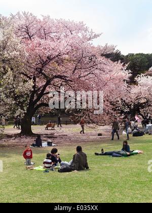 Menschen, die Ruhe in einem Park während der Kirschblüte in Shinjuku Gyōen Nationalgarten in Tokio Japan - Stockfoto