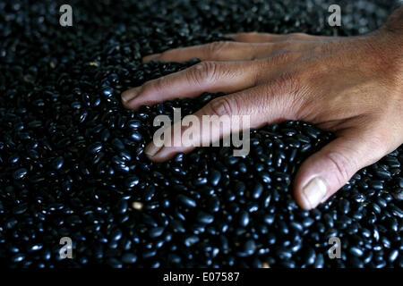 (140505) - SAO PAULO, 5. Mai 2014 (Xinhua)--Bild aufgenommen am 2. Mai 2014 zeigt ein Koch Kommissionierung Bohnen, - Stockfoto