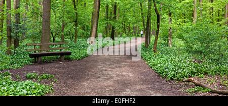 Ein Mann zu Fuß in einen Pfad durch den grünen Wald - Stockfoto