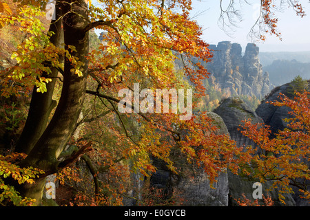 Blick von der Bastei in Richtung Ganssteine, Nationalpark Sächsische Schweiz, Elbsandsteingebirge, Sachsen, Deutschland - Stockfoto