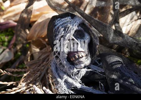 Gruseligen Skelett Teile dienen als Halloween-Dekoration in einem Maislabyrinth. - Stockfoto