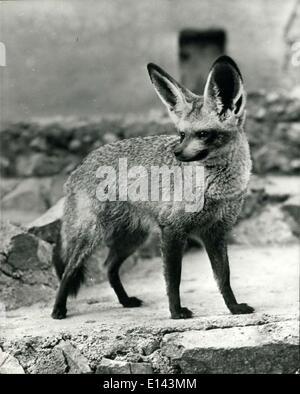 4. April 2012 - große Ohren haben Sie: Jetzt ist hier eine sind gut ausgestattet mit King-Size Ohren. Das Tier, - Stockfoto