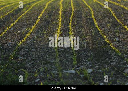 Furchen in einem Feld - Stockfoto
