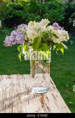 Fliederstrauß(Syringa) in Vase - Stockfoto