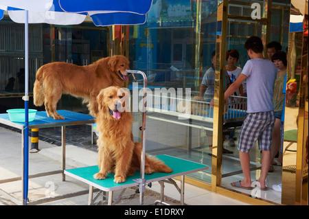 Hund Markt