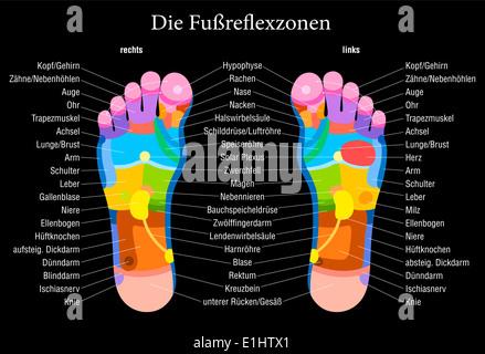 Fuß-Reflexzonenmassage-Diagramm mit genaue Beschreibung der ...