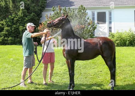Waschen des Pferdes - Stockfoto