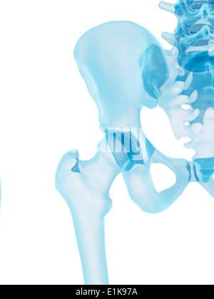 Menschliche Hüftknochen Computer Artwork Stockfoto, Bild: 69878428 ...