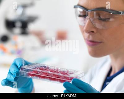 Wissenschaftlerin mit einem multiwell Tablett mit Stammzell-Proben. - Stockfoto