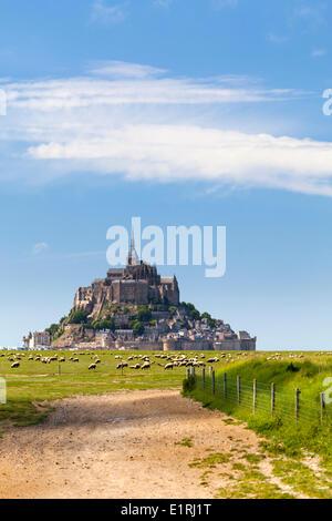 Schafe vor dem Mont Saint-Michel. - Stockfoto