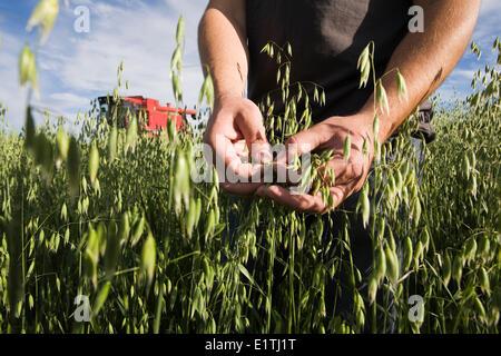 Farmer es Hände Inspektion Hafer ernten mit Rot kombinieren im Hintergrund. - Stockfoto