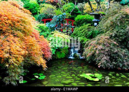 Der japanische Garten in den Butchart Gardens in Victoria, BC, Kanada - Stockfoto