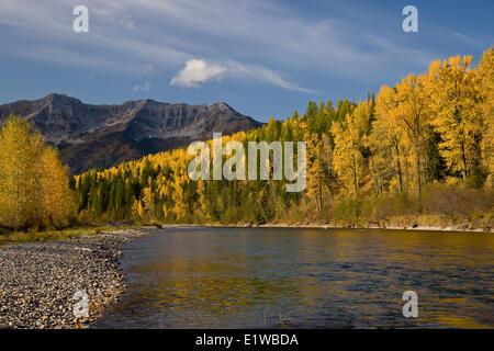 Elk River und Eidechse Sortiment im Herbst, Fernie, BC, Kanada. - Stockfoto