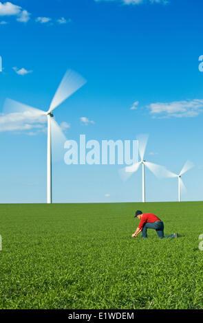 ein Mann Pfadfinder einen frühen Frühling Weizen Wachstumsfeld für Unkraut Krankheit mit Windkraftanlagen im Hintergrund - Stockfoto