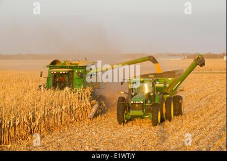 ein Mähdrescher mündet in einem Getreide Wagen unterwegs, während der Futtermais (Getreide) Maisernte, in der Nähe - Stockfoto