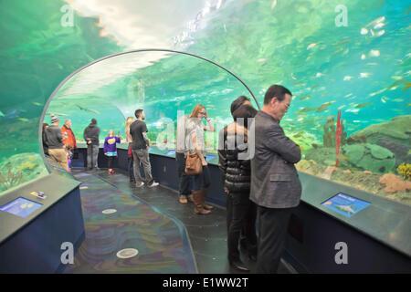 Ripley es Aquarium Toronto, Ontario; Kanada-Sealife-Aquarium - Stockfoto