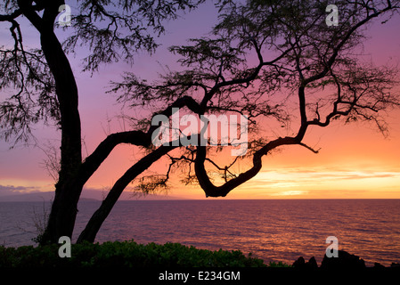 Verzweigten Baum und Sonnenuntergang. Maui, Hawaii. - Stockfoto