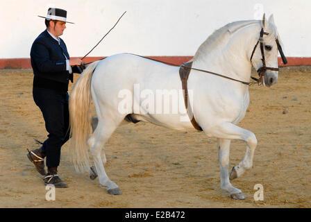 Spanien, Andalusien, Guillena Cortijo Aguila Real, eine Demonstration der Dressur eines andalusischen Pferdes - Stockfoto