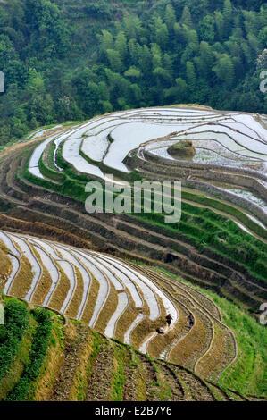 China, Provinz Guangxi, Longsheng, bei Longji Reisterrassen - Stockfoto