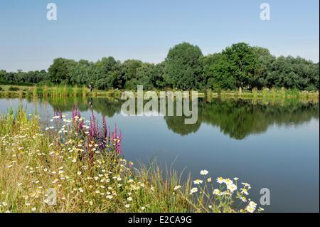 Frankreich, Nord, Le Cateau-Cambrésis, Mann zu Fuß durch die Stadt See - Stockfoto