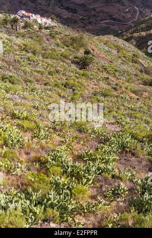 Spanien Kanaren Teneriffa Insel Teno ländlichen Park Masca und Feigenkaktus (Opuntia Ficus-Indica) Blick vom Wachturm - Stockfoto