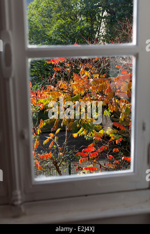 Baum Herbst Farben, angesehen durch Fenster anzeigen - Stockfoto