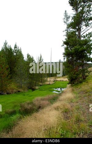 Leuchtend grüne Rasen wächst im warmen Wasser aus einer heißen Quelle neben der Grand Loop Road nördlich von Norris - Stockfoto