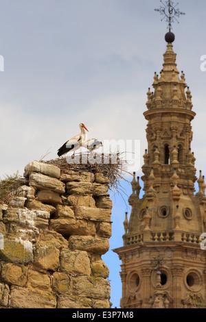 Santo Domingo De La Calzada, La Rioja, Spanien. Störche nisten auf der alten Stadtmauer mit dem Turm der Kathedrale - Stockfoto