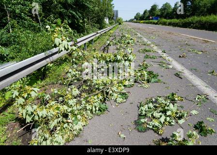 Heruntergefallene Äste lagen auf der Autobahn A43 in Herne, Ruhrgebiet, Westdeutschland, nach den schweren Sturmtief Ela