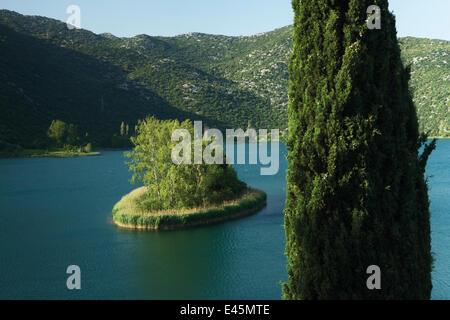 Mittelmeer Zypresse (Cupressus Sempervirens) am Rande des Ocuša Jezero, eines der Region Bacinska Jezera (Seen von - Stockfoto