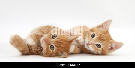 Zwei Ingwer Kätzchen liegen auf ihren Seiten. - Stockfoto