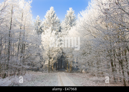 Einsame Weg durch einen verschneiten Wald mit dem Sonnenlicht auf die Bäume - Stockfoto