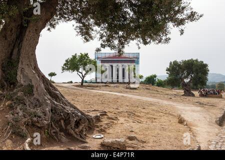 Concordia-Tempel unter Verschluss. Eingerahmt von einem alten Olivenbaum eine künstlerische Darstellung der Tempel - Stockfoto