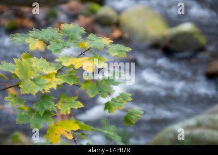 im Hinblick auf bode Tal (Bodetal), Landkreis Harz, Harz, Sachsen-Anhalt, Deutschland - Stockfoto