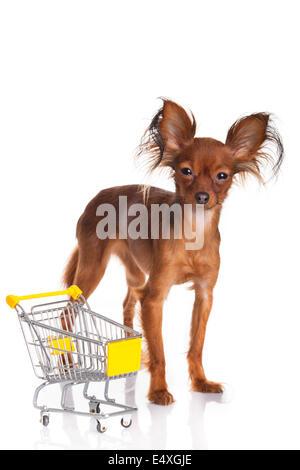 Lustige kleine Hund. - Stockfoto