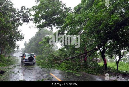 Wenchang, Chinas Provinz Hainan. 18. Juli 2014. Bäume fallen unterwegs als der Taifun Rammasun Ansätze in Wenchang, - Stockfoto