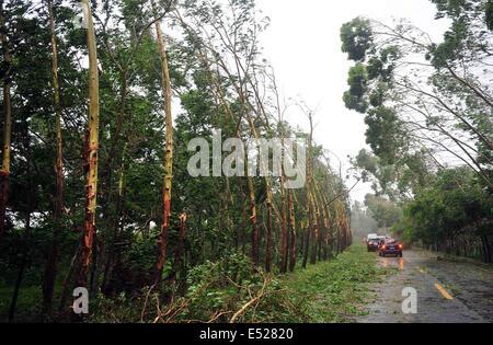 Wenchang, Chinas Provinz Hainan. 18. Juli 2014. Bäume biegen Sie bei starkem Wind als der Taifun Rammasun Ansätze - Stockfoto