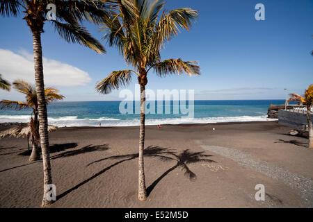 Kokospalmen am schwarzen Strand von Puerto Naos, La Palma, Kanarische Inseln, Spanien, Europa - Stockfoto