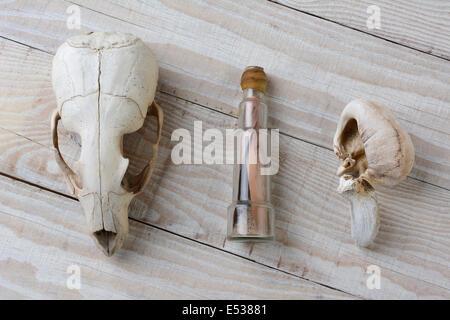 Beim Strand Kämmen in einer abgelegenen Gegend Gefundene Items. Ein Seelöwe Schädel, ein Innenohr Walknochen und - Stockfoto